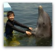 Miami Attractions: Swim with Dolphins