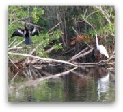 Miami Attractions: Everglades Wildlife