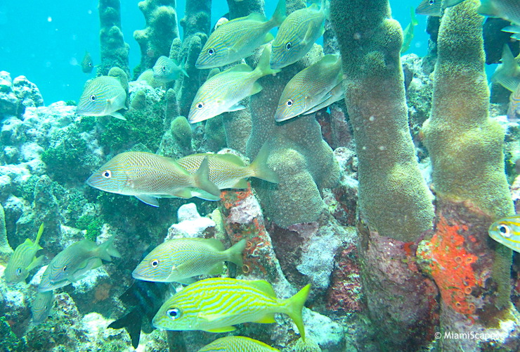 Tropical Coral Reef and Fish at Pennekamp Park