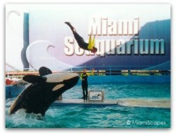 Orca Show at Miami Seaquarium