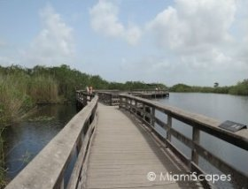 Everglades Anhinga Trail Boardwalks