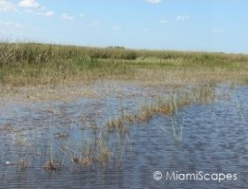 Fresh Water Marsh Habitat