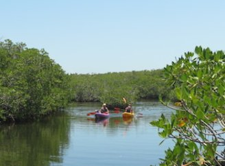 Kayaking the Mangrove trails at John Pennekamp State Park