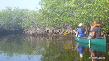 Canoeing in Biscayne Park