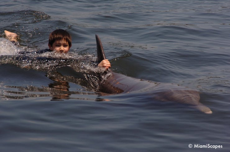 Swiming with Dolphins at the Dolphin Research Centre - a Dorsal Pull