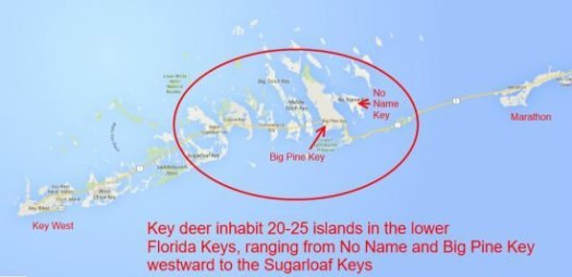Map of Lower Florida Keys where Key Deer are found