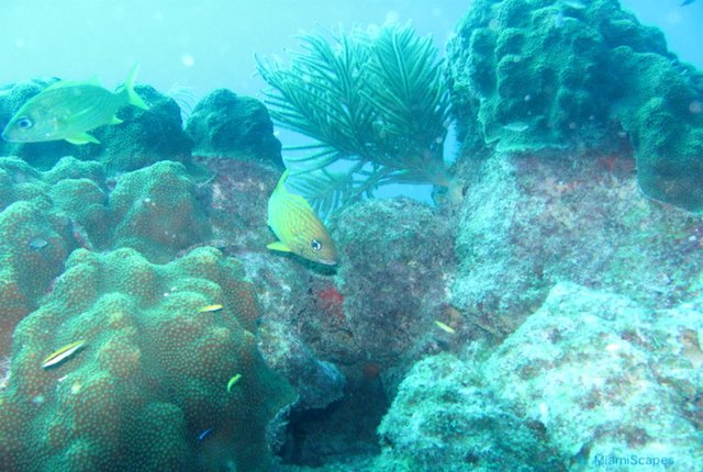 Beautiful Coral Reefs at Biscayne National Park