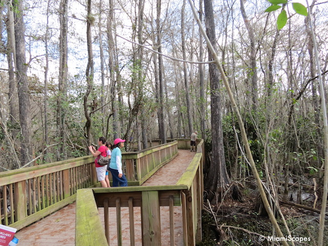 The boardwalk at Kirby Storter at Big Cypress Preserve