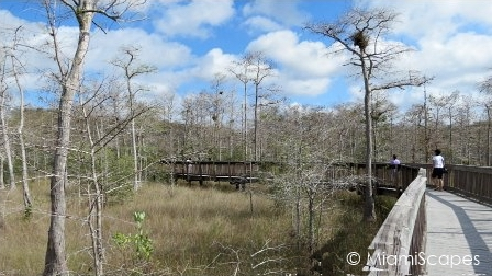 Boardwalk through sawgrass prairie at Kirby Storter at Big Cypress Preserve