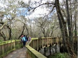 Kirby Storter Boardwalk at Big Cypress National Park