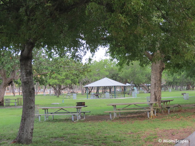 Picnic Tables at Crandon Park