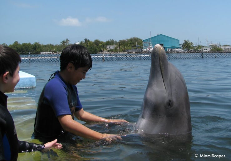Our Dolphin Encounter at the Dolphin Research Center
