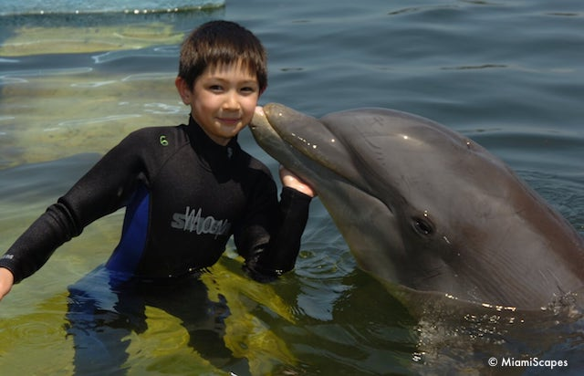 Dolphin Kiss at the Dolphin Research Center