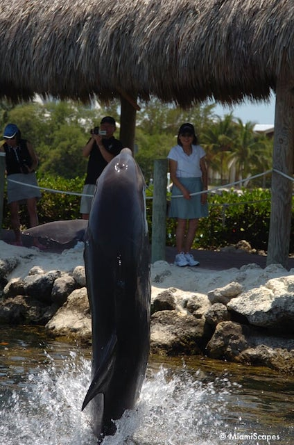 Grandma and Grandpa watch the encounter at Dolphin Research Center