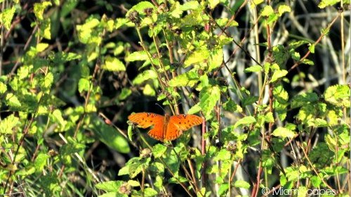 Eco Pond: butterfly