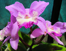 Miami May Events: Orchid Show