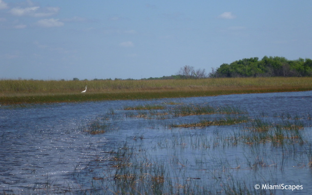 Everglades Airboat Tour: Marshes and Hardwood Hammock