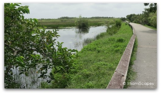 The Anhinga Trail at the Everglades: lots of wildlife on  the paved stretch along the canal