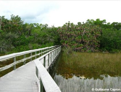 Mahogany Hammock Boardwalk