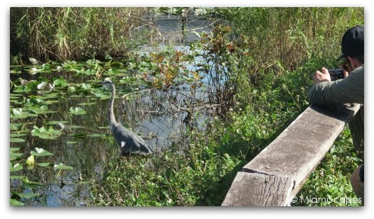 Taking Pictures in the Everglades