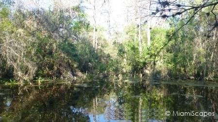 Pond at Fakahatche Strand Big Cypress Bend Boardwalk