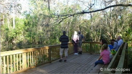 Viewing Platform at Fakahatche Strand Big Cypress Bend Boardwalk
