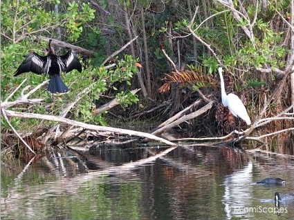 Wildlife at the Florida Everglades