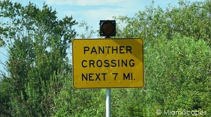 Florida Panther Crossing Sign