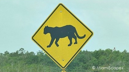 Florida Panther Warning Crossing Sign on Freeway