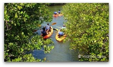 Kayaking in the Oleta River