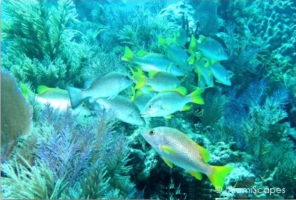 Beautiful reef off Key Largo