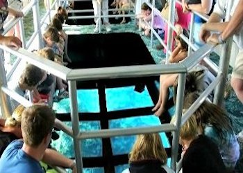 Glass  Bottom Boat Tour Key Largo