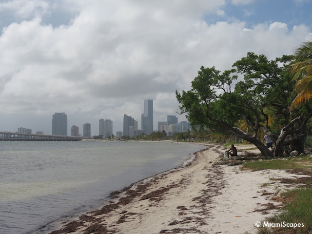 Hobie Beach - Miami Skyline