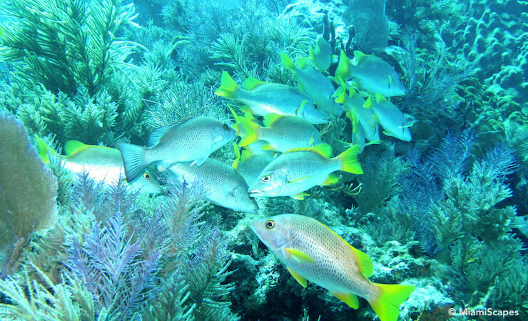 Colorful Reefs and Tropical Fish in the Florida Keys