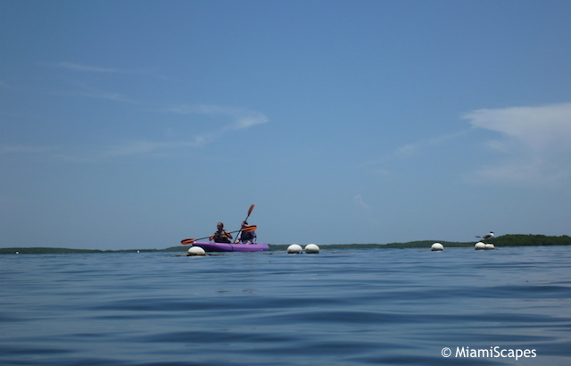 Kayaking in the sound at John Pennekamp
