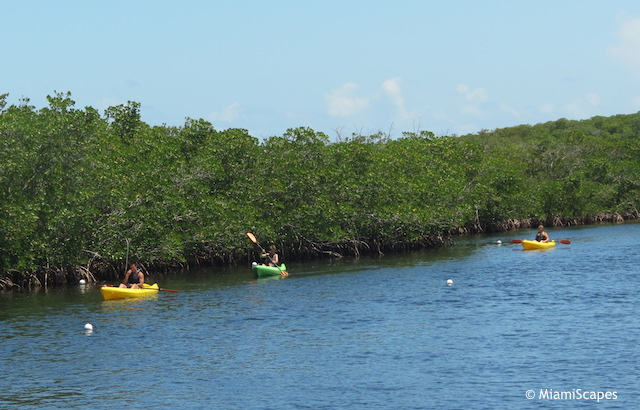 Kayaking along mangrove coastline at John Pennekamp