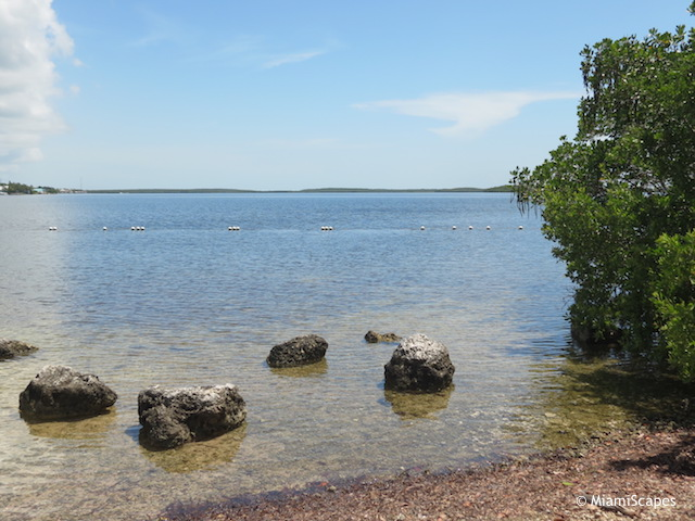 Rocky Beach at Pennekamp Park