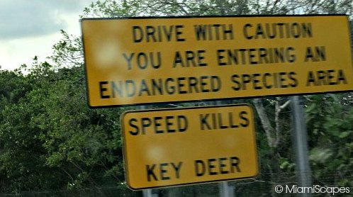 Key Deer Warning Signs on Overseas Highway