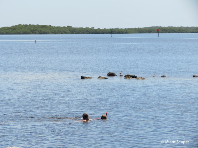 Kids snorkeling at John Pennekamp beach