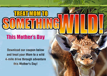Mothers Day at Lion Country Safari