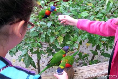Lion Country Safari World - Lory Feeding
