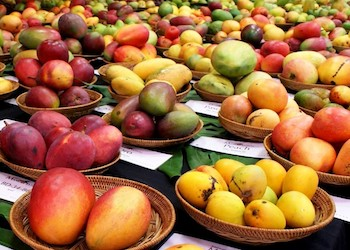 Mango Festival in Miami