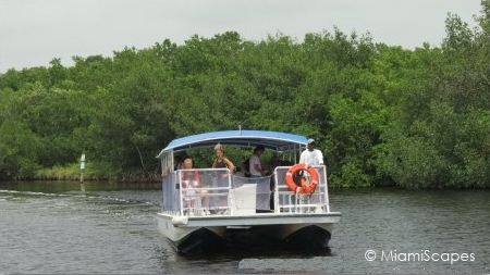 Mangrove Backcountry Boat Tour at Everglades National Park