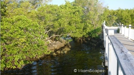 Boardwalk along mangrove coastline at Biscayne National Park