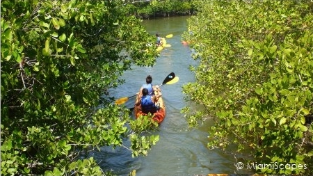 Kayaking through the Mangroves at Oleta River State Park