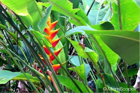 Beautiful tropical blooming trees and shrubs at Zoo Miami