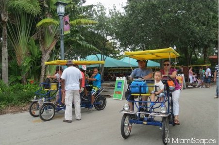 Getting around with Safari cycles  at Zoo Miami