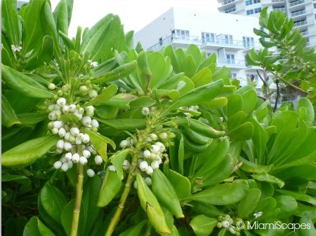 Splendid blooms from the Miami Beach Boardwalk