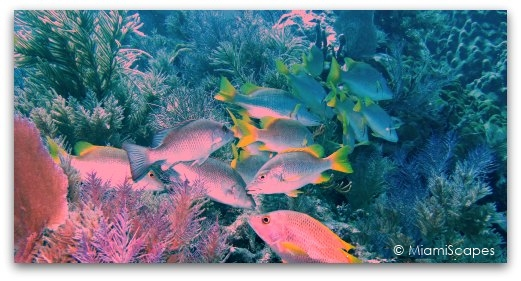 MiamiScapes: a shallow reef at the Florida Keys