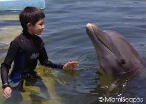 Swimming with Dolphins at Dolphin Research Center